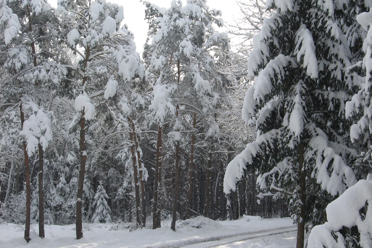 Im Winterwald