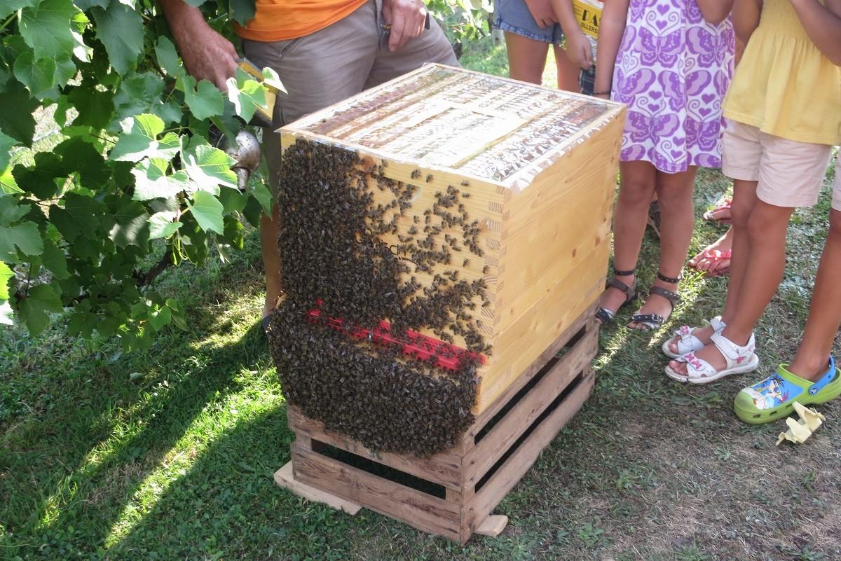 Wie kommt der Honig ins Glas?
