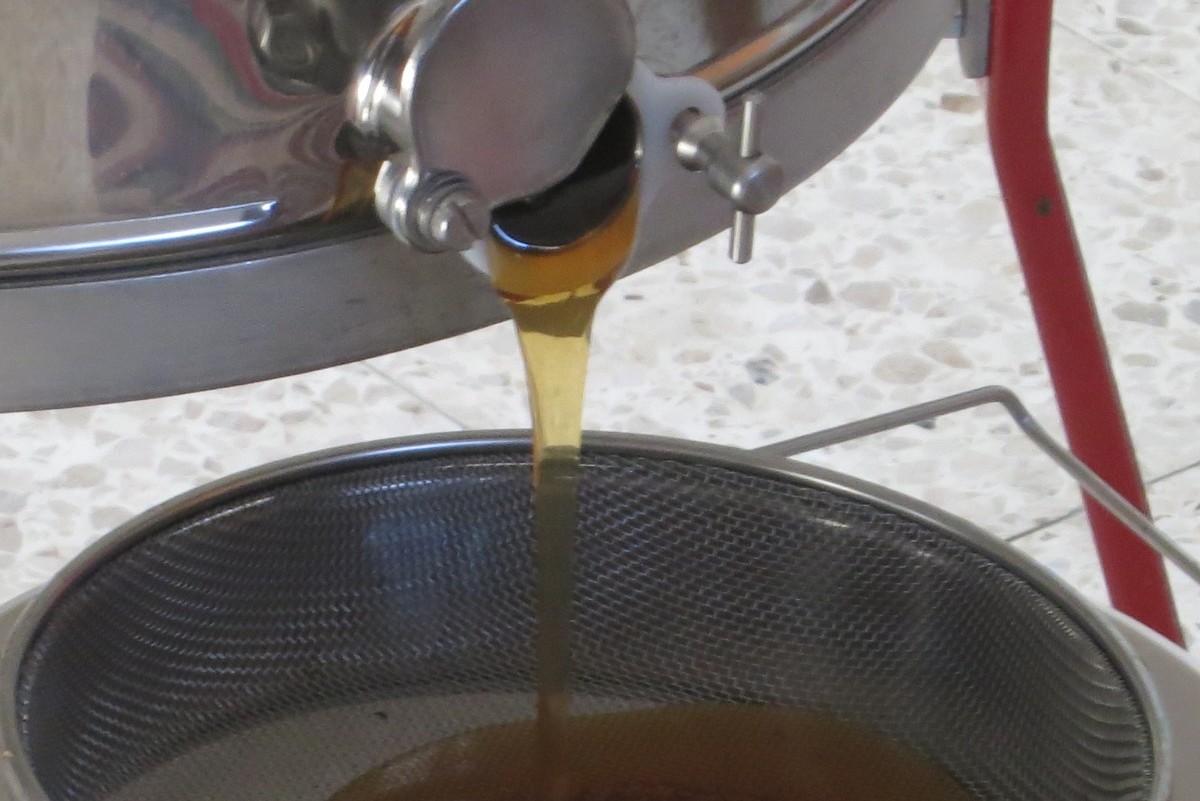 Alles über Honigernte und -verarbeitung