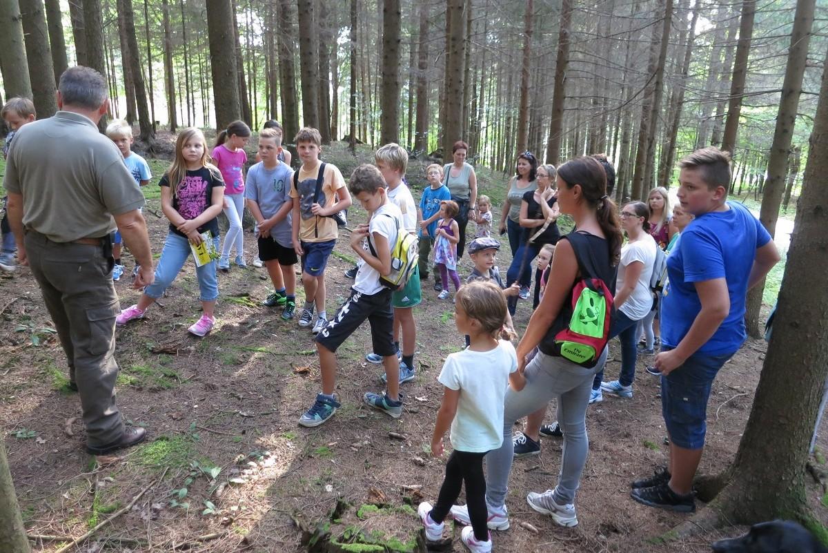 Natur pur - Wissenswertes über Bäume, Tiere und Sträuche
