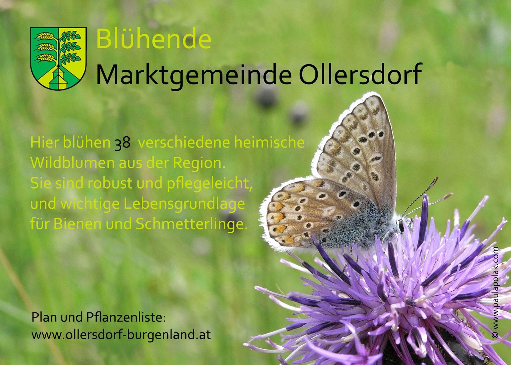 Blühende Marktgemeinde Ollersdorf