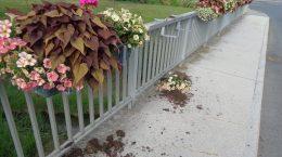 Zu Boden geworfene Blumentröge beim Brückengeländer des Strembaches